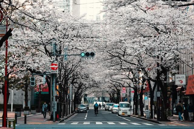 Ingin Tinggal di Jepang Selamanya! Cara Memperoleh dan Mekanisme Izin Tinggal Permanen