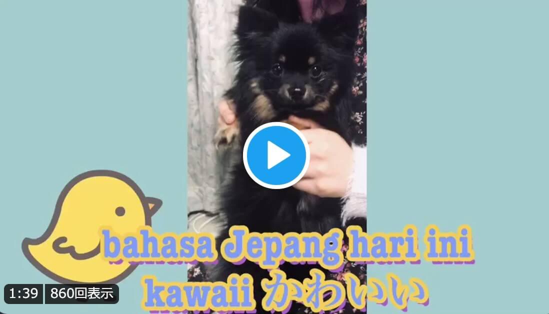 Kawaii (Lucu, Manis, Imut) – Belajar Bahasa Jepang